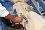 Bayer anuncia venda da unidade de saúde animal para a Elanco Animal Health por US$ 7,6 bilhões